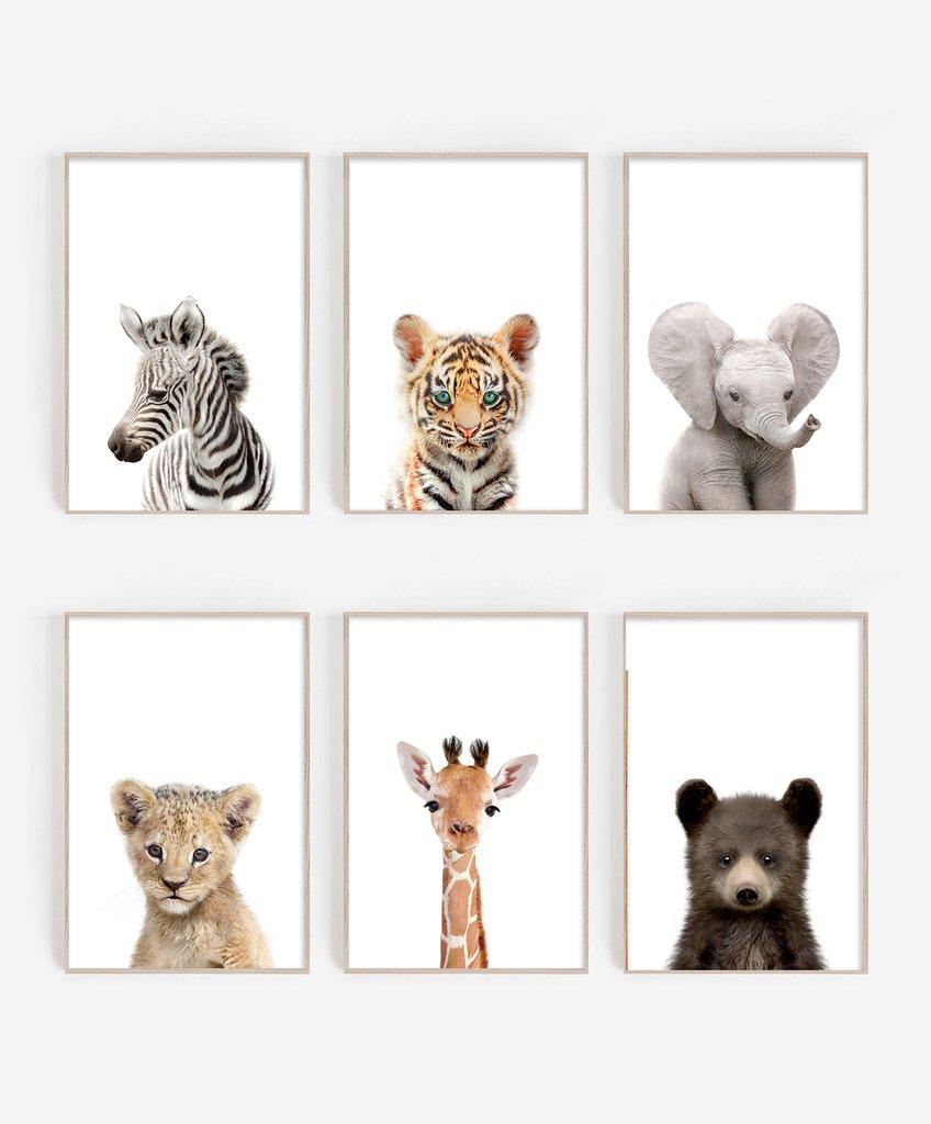cuadro de animales de zoologico